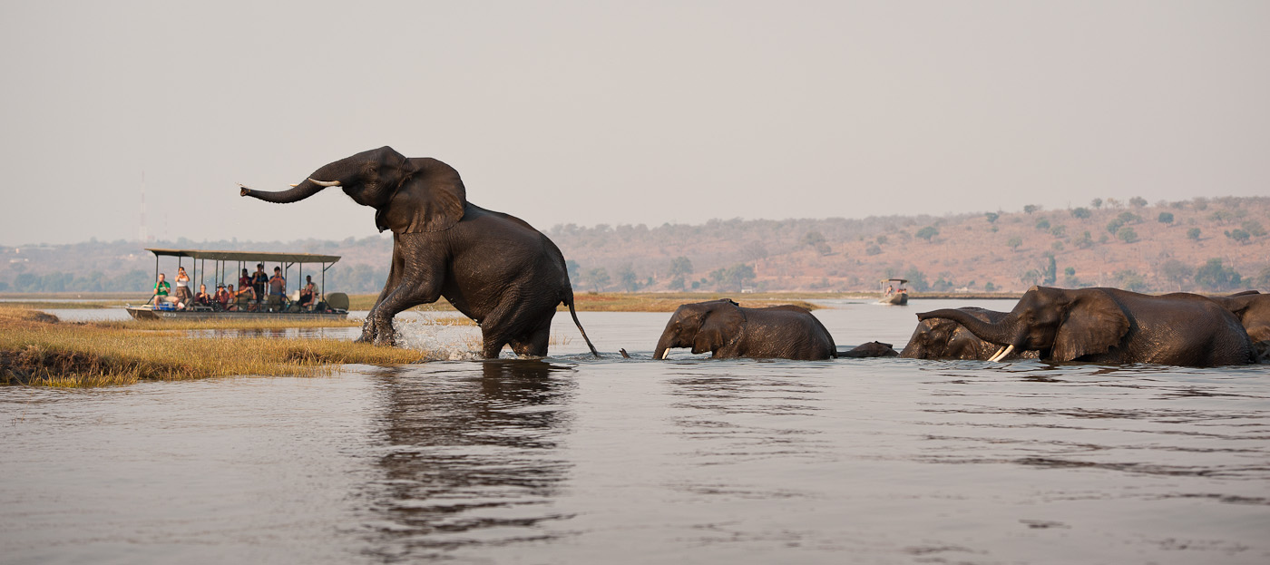 Best Of Botswana Wildman Safaris - Chobe river